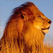 Lion Sounds icon