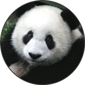 Panda Sounds icon