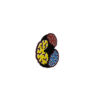 Color Tap icon