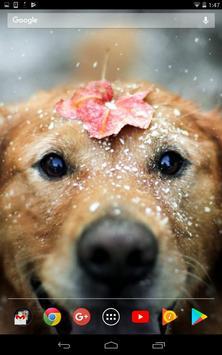 Cute winter dogs screenshot 2