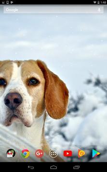 Cute winter dogs screenshot 3