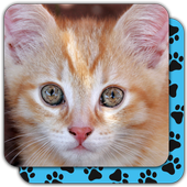 Puzzle Games free: Cute Cats icon