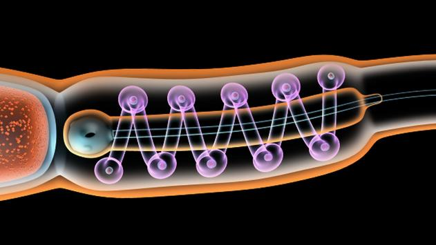 VR Sperm Structure apk screenshot