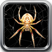 Spider live wallpaper icon