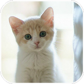 Cats lovely puzzle icon