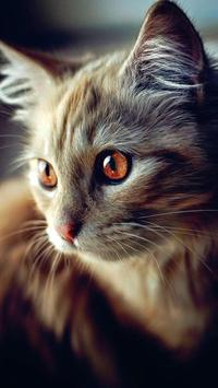 Cats Wallpapers HD apk screenshot