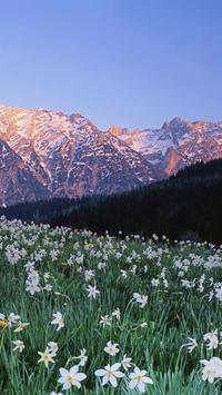 Austria Wallpapers HD apk screenshot