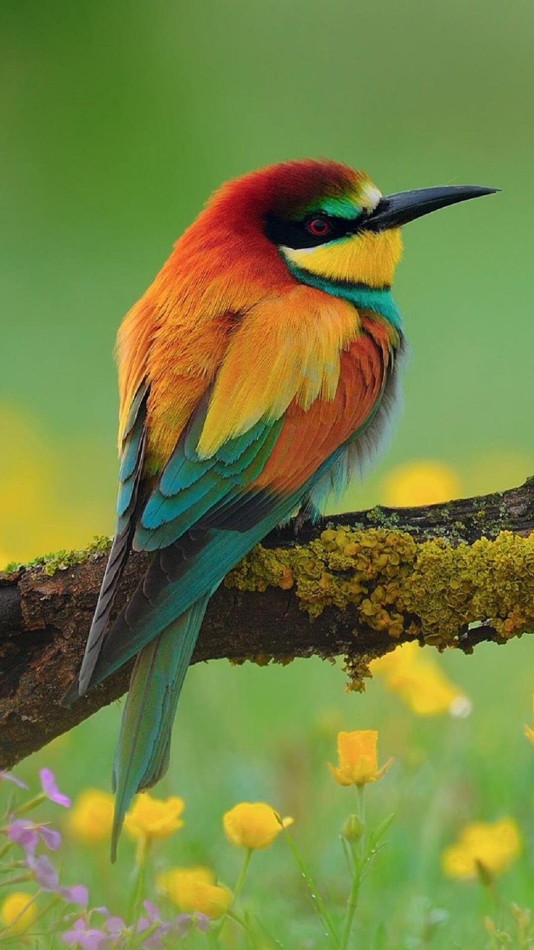 Beautiful Birds Wallpapers Hd For Android Apk Download