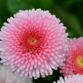 Flowers Beauty Wallpapers HD 4 icon