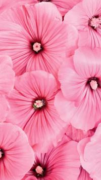 Flowers Beauty Wallpapers HD 4 apk screenshot