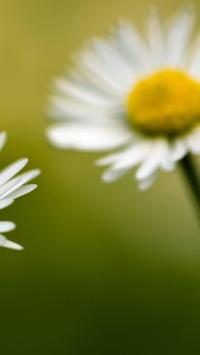 Flowers Beauty Wallpapers HD 3 poster