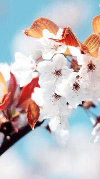 Flowers Beauty Wallpapers HD 3 apk screenshot