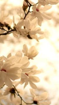 Magnolia Wallpapers HD screenshot 17