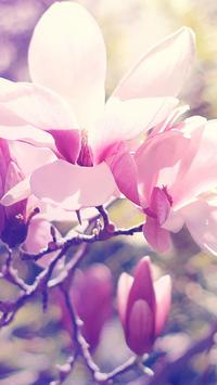 Magnolia Wallpapers HD screenshot 12