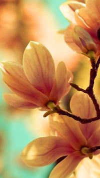 Magnolia Wallpapers HD screenshot 2