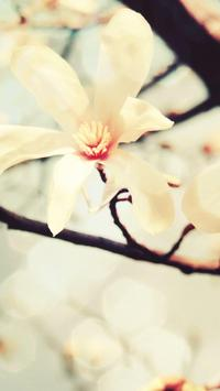 Magnolia Wallpapers HD screenshot 3