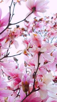 Magnolia Wallpapers HD screenshot 4
