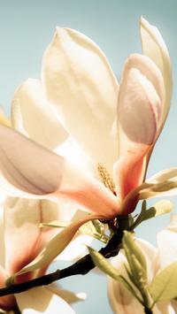 Magnolia Wallpapers HD screenshot 7