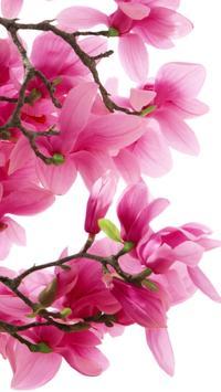 Magnolia Wallpapers HD screenshot 8