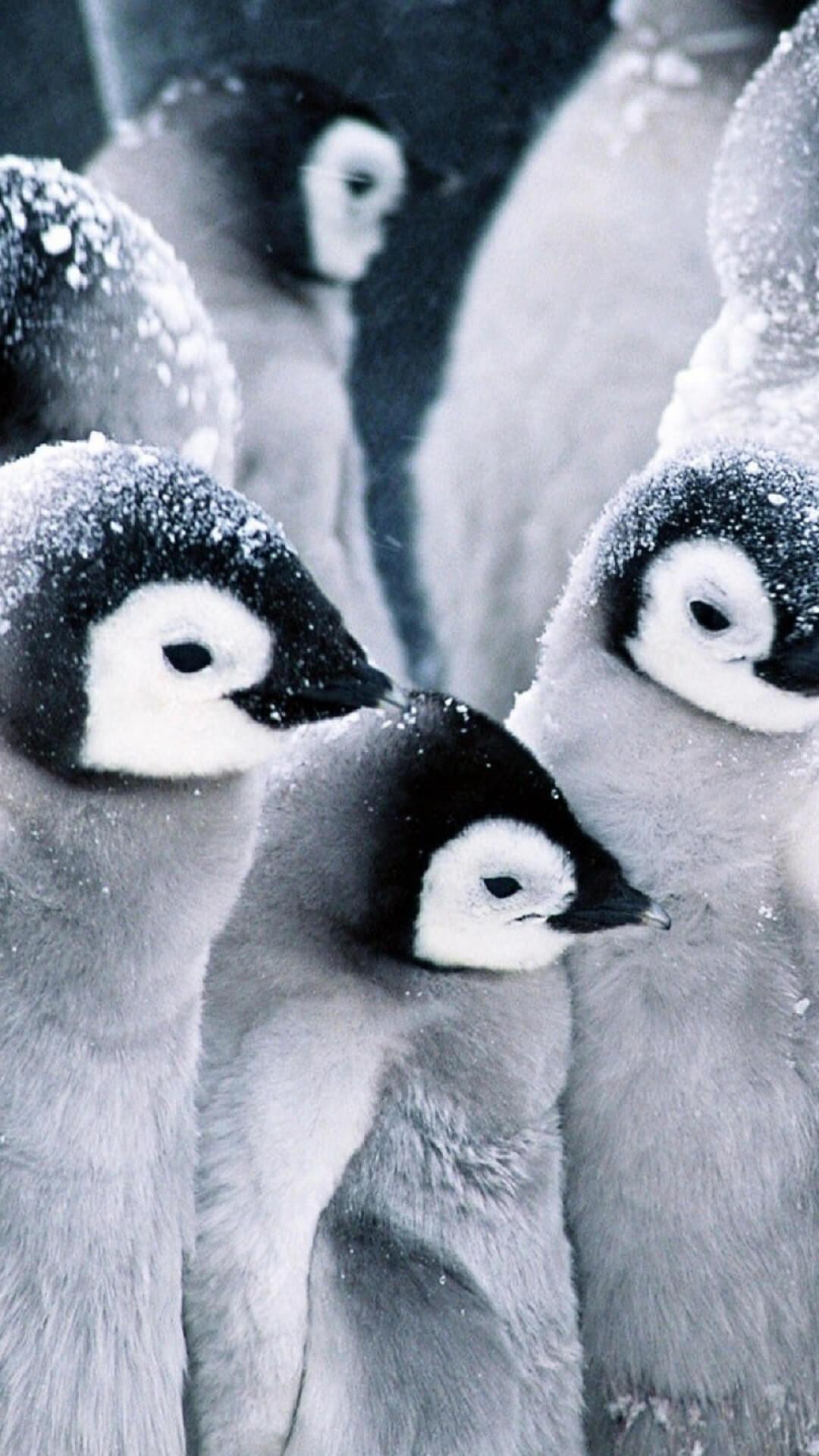 صورة لطيور البطريق ! - صفحة 2 Screen-1.jpg?fakeurl=1&type=