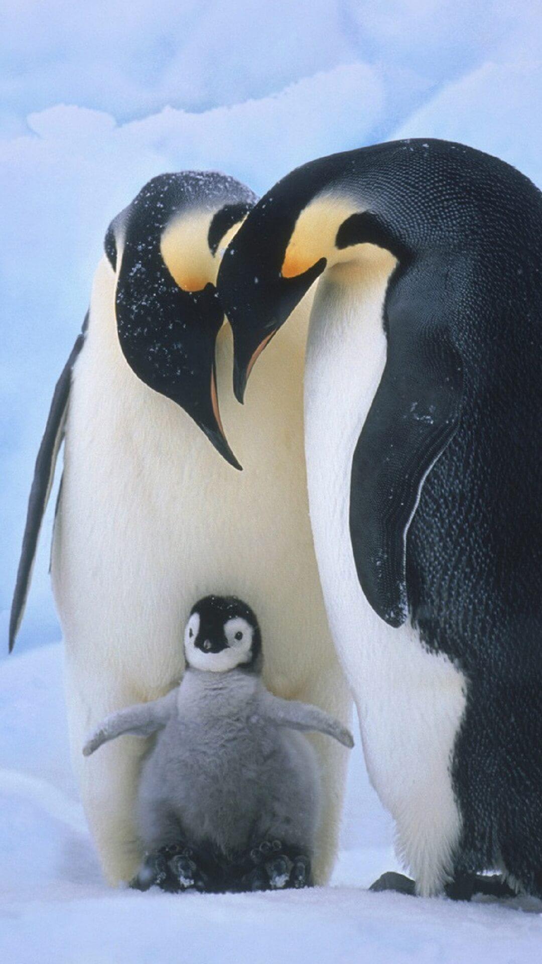 صورة لطيور البطريق ! - صفحة 2 Screen-2.jpg?fakeurl=1&type=