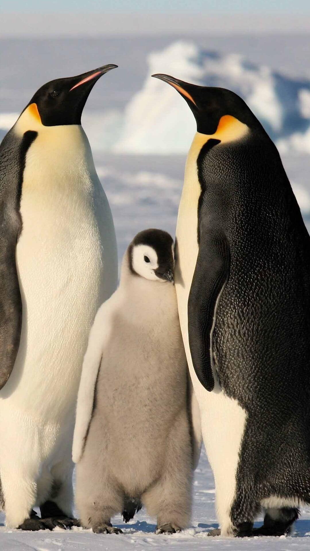 صورة لطيور البطريق ! - صفحة 2 Screen-6.jpg?fakeurl=1&type=