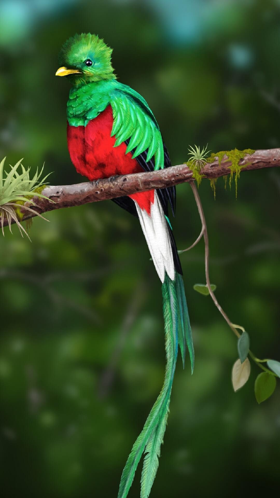 Quetzal Wallpapers HD for Android - APK Download