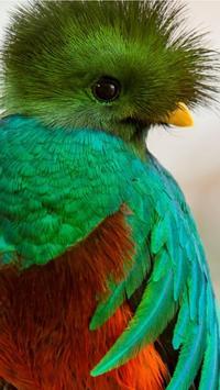 Quetzal Wallpapers HD apk screenshot