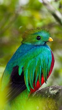Quetzal Wallpapers HD poster