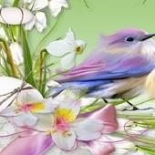 Spring Bird Lock Screen icon