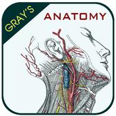 Gray's Anatomy - Anatomy Atlas 2020 आइकन