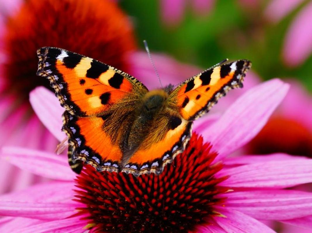 Beautiful Butterfly Wallpapers For Android Apk Download