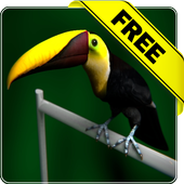 Tucan live wallpaper Free icon