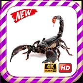 Scorpion King Wallpaper HD icon