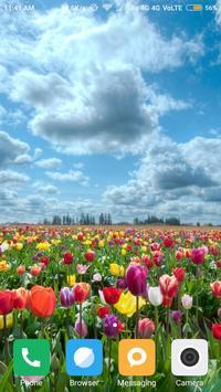 Tulips Flower Wallpaper apk screenshot