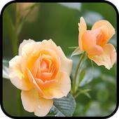 HD Fresh Flowers icon