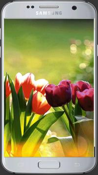 HD Fresh Flowers screenshot 3