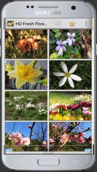 HD Fresh Flowers poster