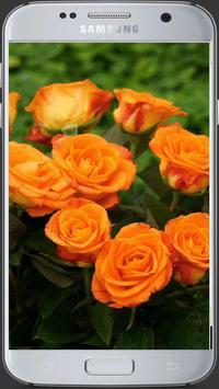 HD Fresh Flowers screenshot 21