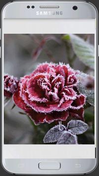 HD Fresh Flowers screenshot 23
