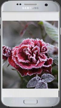 HD Fresh Flowers screenshot 7