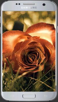HD Fresh Flowers screenshot 4