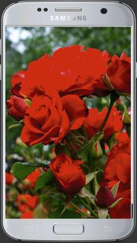 HD Fresh Flowers screenshot 6