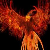 Fiery bird Live WP icon
