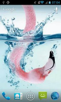 Flamingo in water Live WP poster