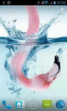 Flamingo in water Live WP apk screenshot
