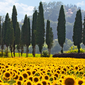 tuscany wallpaper icon