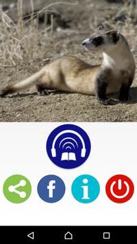 Ferrets Great Funny Home Pets apk screenshot