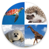 Animal Quiz - 2018 Edition icon