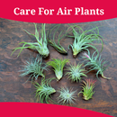 How To Care For Air Plants APK